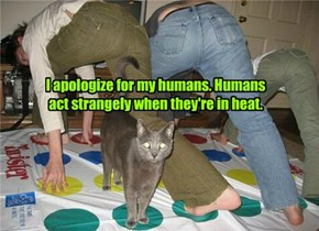 I apologize for my humans. Humans act strangely when they're in heat.