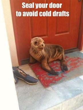 Winterproofing Tip #597