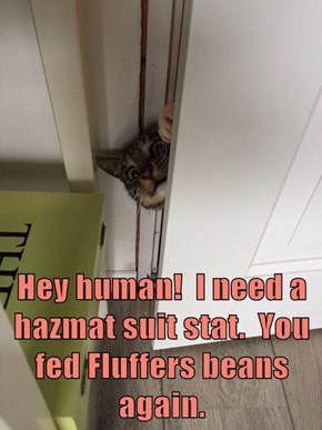 Hey human!  I need a hazmat suit stat.  You fed Fluffers beans again.