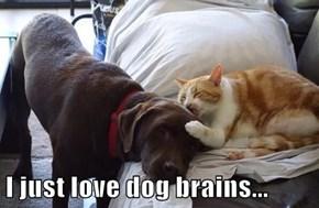 I just love dog brains...