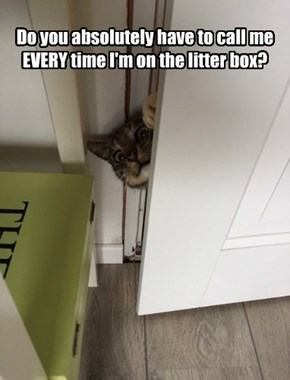 Do you absolutely have to call me EVERY time I'm on the litter box?