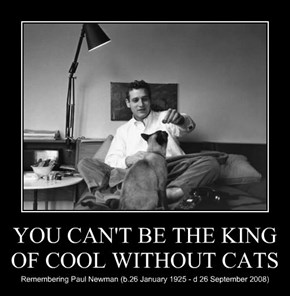 YOU CAN'T BE THE KING OF COOL WITHOUT CATS
