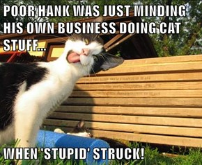POOR HANK WAS JUST MINDING HIS OWN BUSINESS DOING CAT STUFF...  WHEN 'STUPID' STRUCK!