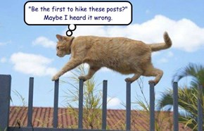 """Be the first to hike these posts?""  Maybe I heard it wrong."