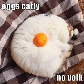 eggs catly  no yolk