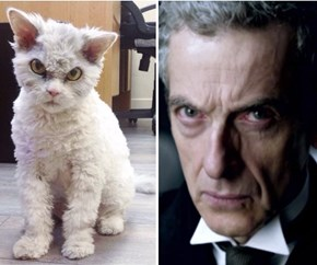 Living Proof That Peter Capaldi Is An Animagus