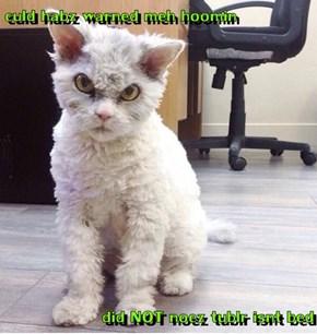 culd habz warned meh hoomin  did NOT noez tublr isnt bed