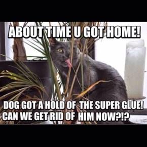 Damn that dog!!!!
