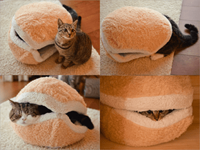 Behold the Cat Burger