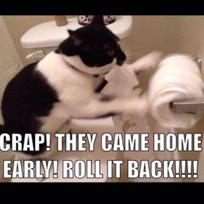 Rollin'!!!