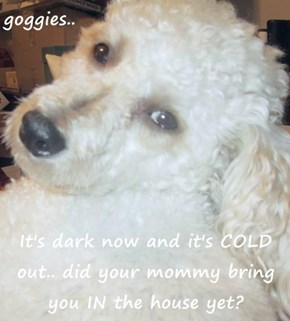 goggies..  It's dark now and it's COLD out.. did your mommy bring you IN the house yet?
