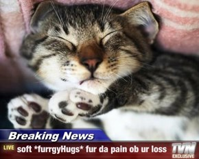 Breaking News - soft *furrgyHugs* fur da pain ob ur loss
