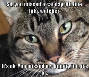 So, you missed a cat day. Off line, lala, wuteber.  It's ok. You missed my bippity too, it's ok.