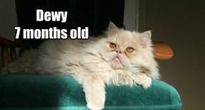 Dewy allcat's kittie