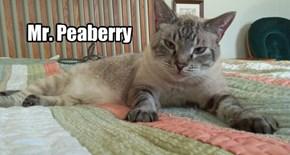 Mr.Peaberry allcat's kittie