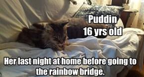 Puddin  allcats' kittie