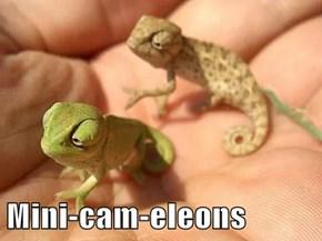 Mini-cam-eleons