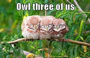 Owl three of us