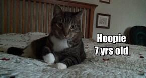 Hoopie  allcats' kittie