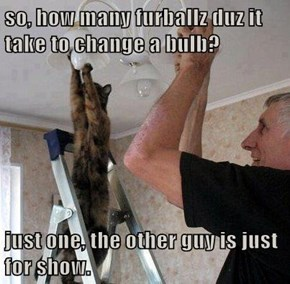 so, how many furballz duz it take to change a bulb?  just one, the other guy is just for show.