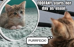 FOOFANY begins her day.