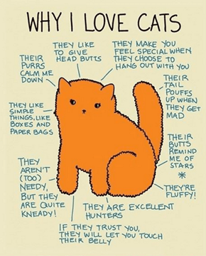 Reasons Why Everyone Could Love Cats