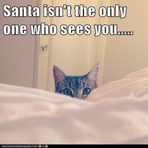 This Cat Is Santa's Spy!