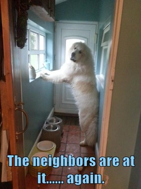 The neighbors are at it...... again.