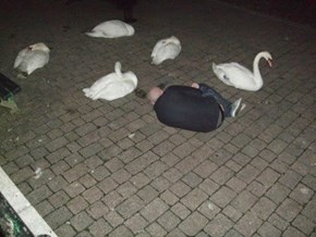 Day 12: I'm afraid they think I might be a black Swan