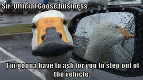 Sir. Official Goose business.   I'm gonna have to ask for you to step out of the vehicle.