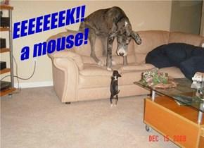 EEEEEEEK!! a mouse!