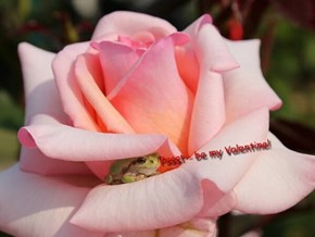 Pssst - be my Valentine!