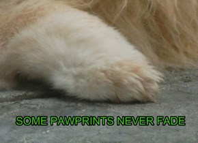 SOME PAWPRINTS NEVER FADE