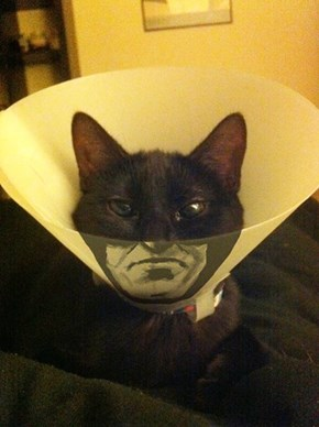 Batcat Vs The Cone of Shame