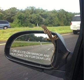 OBJECTS ON MIRROR ARE HOLDING ON FOR DEAR LIFE