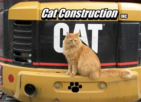 Custom Litter Boxes & Cat Towers Our Specialty...
