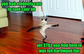 Cat Ladeez...Crazy, But in a Bery Cleen Way
