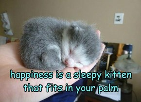 happiness is a sleepy kitten that fits in your palm
