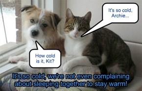 """Cats and Dogs, Living Together... Real """"End of the World"""" Type Stuff!"""