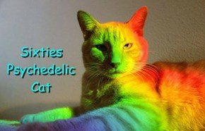 Sixties Psychedelic Cat