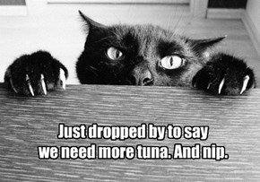 Just dropped by to say  we need more tuna. And nip.