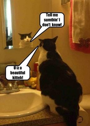 U iz a beautiful kitteh!