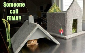 Tornado Alley-Cat