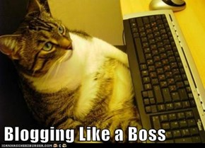 Blogging Like a Boss
