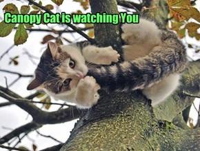 Ceiling Cat's Outdoor Cousin