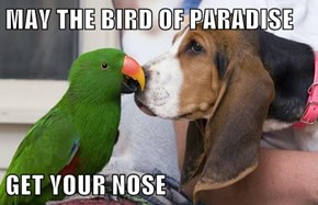 MAY THE BIRD OF PARADISE  GET YOUR NOSE
