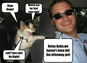 Kittehs Are Skilled Backseat Drivers
