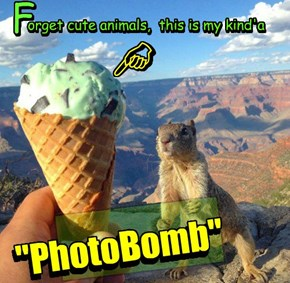 Ice Cream Trumps Squirrel everytime....