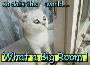 the world thru a kitten's eyes....