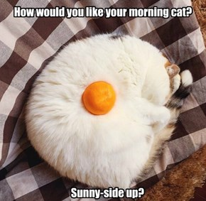 How would you like your morning cat?